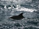 Delphin - Yachtcharter Schweden, Mitsegeln