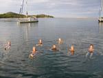 Morning swim - Yachtcharter Schweden, Mitsegeln Schweden