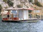 Fresh mussels - Yachtcharter Schweden, Mitsegeln Schweden