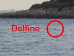 Delfine - Yachtcharter Schweden, Mitsegeln Schweden